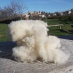laine-cardée