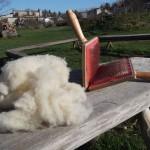 laine-cardée-carde